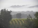 Flanagan Vineyards RRV