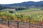 Saini Vineyards